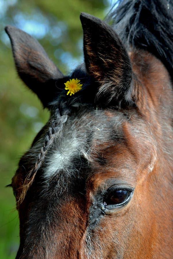 Alto vicino del cavallo fotografia stock