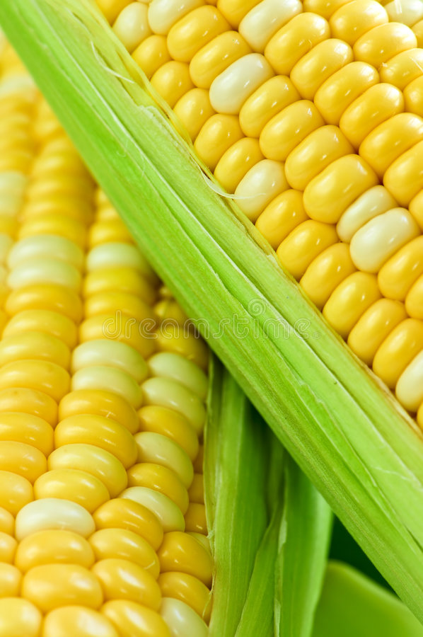 Alto vicino del cereale immagine stock libera da diritti