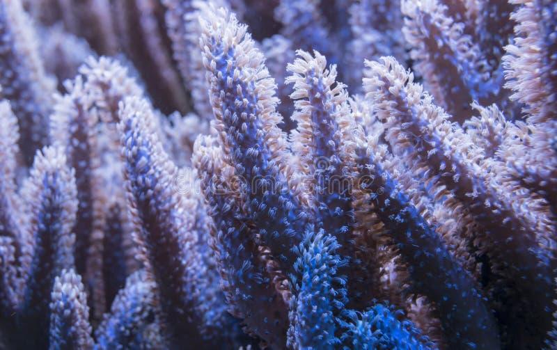 Alto vicino del corallo immagine stock