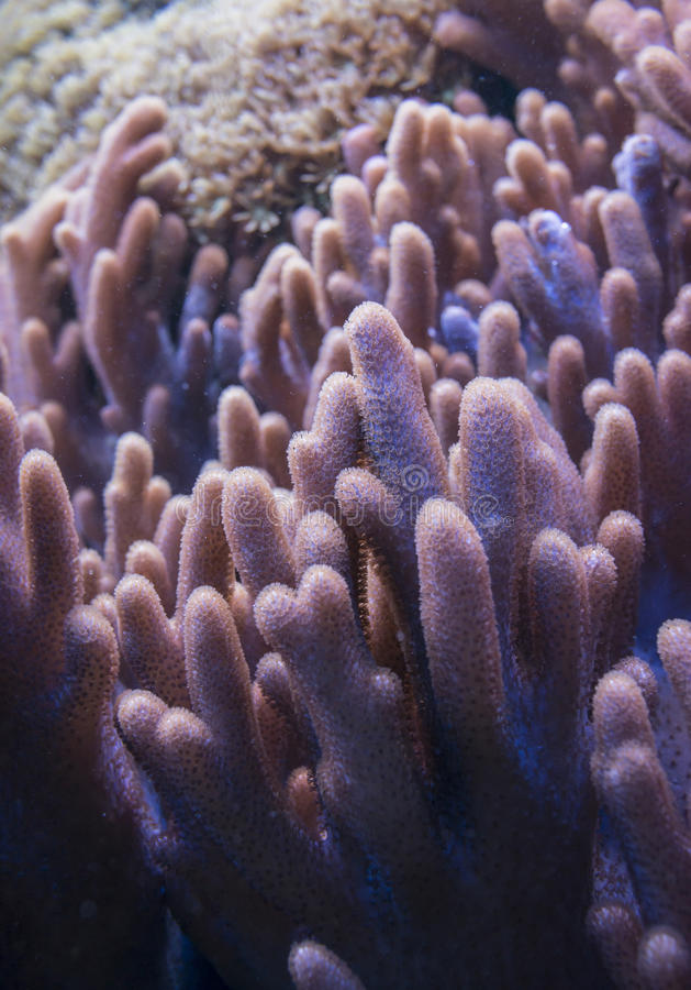 Alto vicino del corallo immagini stock