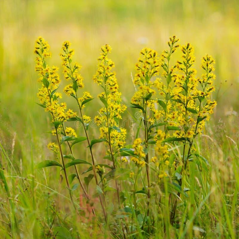 alto vicino del giallo carico. immagine stock libera da diritti