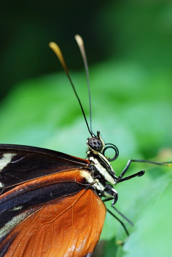 Alto vicino della farfalla immagini stock