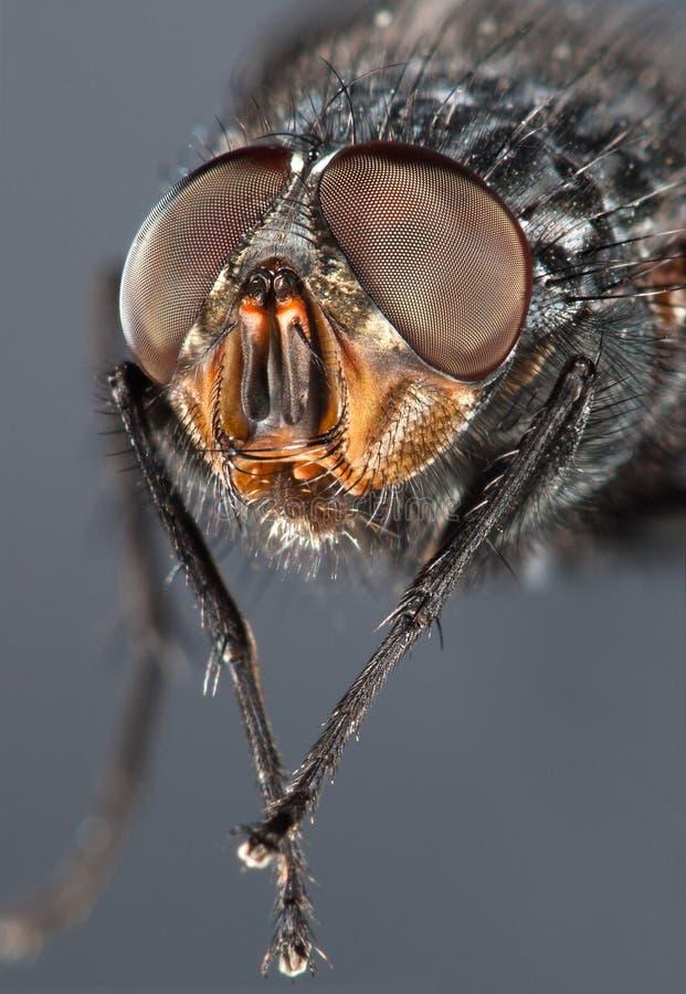 Alto vicino della mosca immagine stock