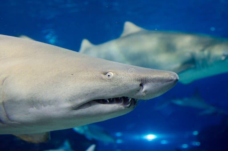 Alto vicino dello squalo fotografie stock