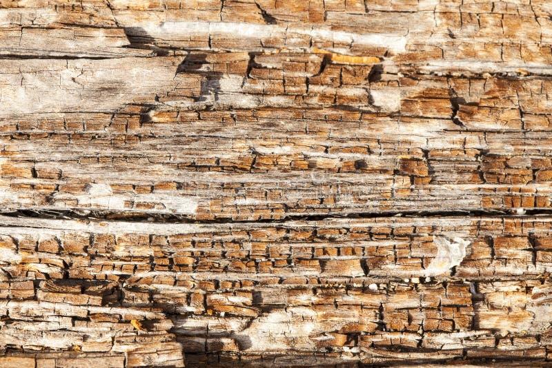 Alto vicino di legno di decomposizione immagini stock
