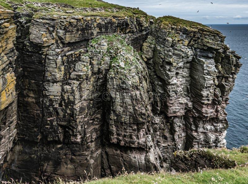 Altos acantilados en la isla de Noss, Shetland fotografía de archivo libre de regalías