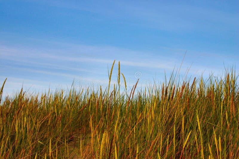 Altos hierba y cielo imagen de archivo