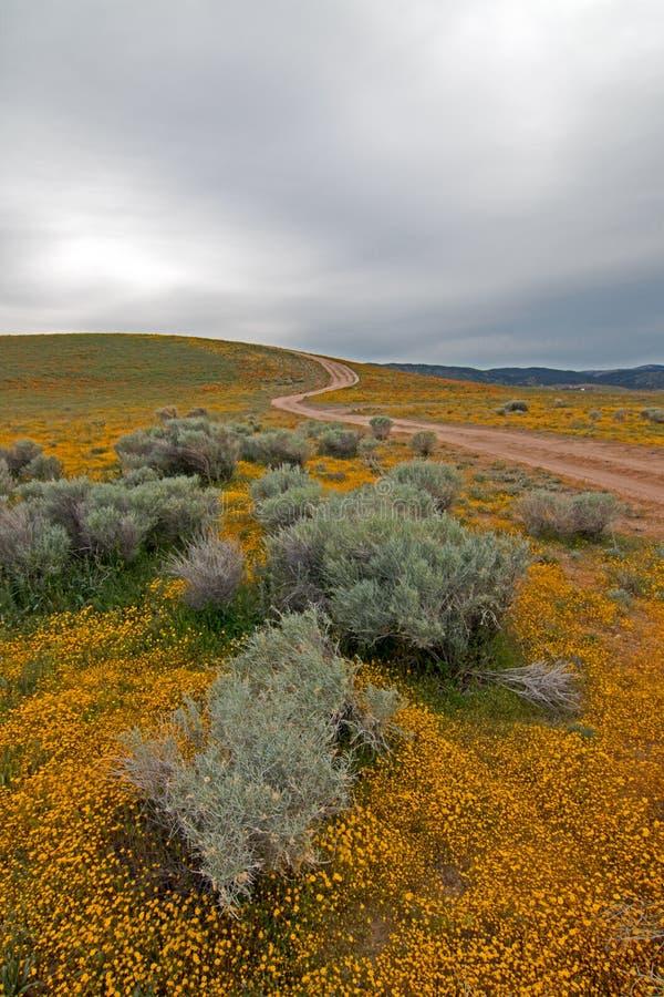 Altos Wildflowers del desierto debajo de los cielos cubiertos entre Lancaster y Palmdale California fotografía de archivo libre de regalías