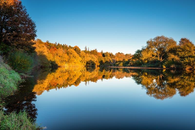 Alträ reflekterat i River Tyne royaltyfri bild