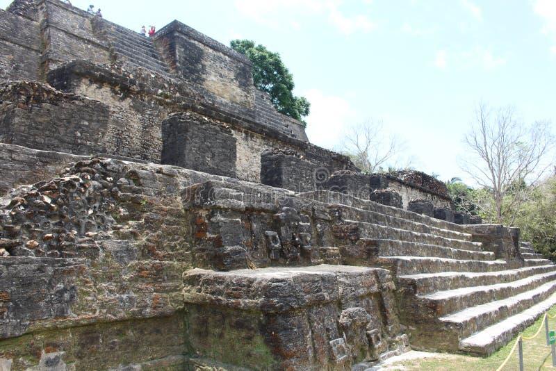 Altun Ha Mayan ruïneert landschapsscène stock foto's