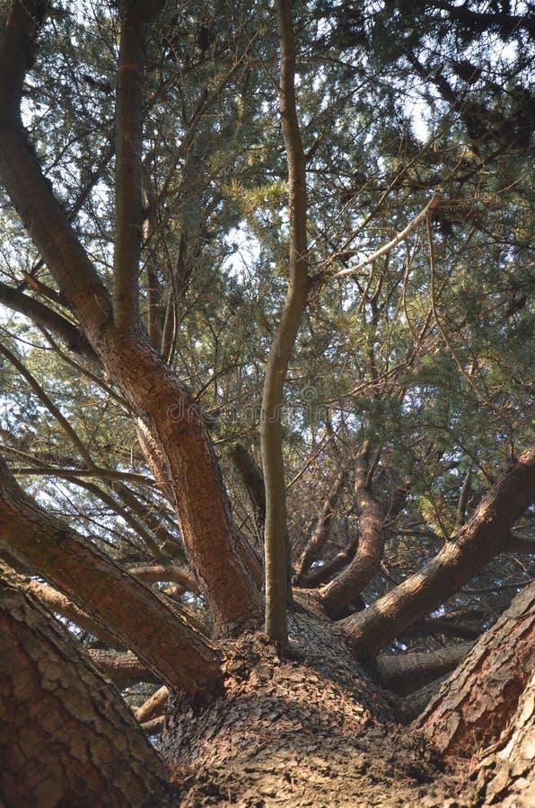 A altura da árvore imagem de stock royalty free