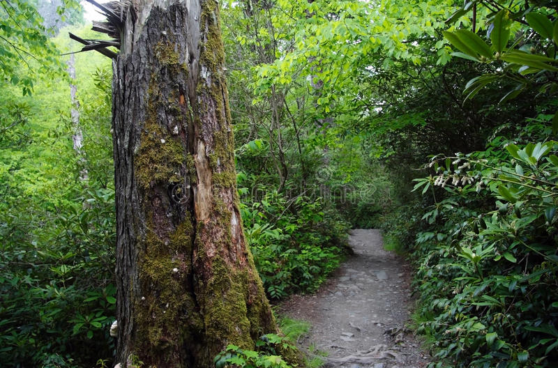 Download Alum Cave Bluffs Trail Royalty Free Stock Photos - Image: 20415708