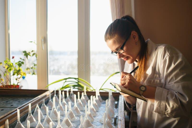 Aluno diplomado da mulher perto da tabela da germinação Sciencist que redige dados importantes ao caderno ou ao registro imagens de stock