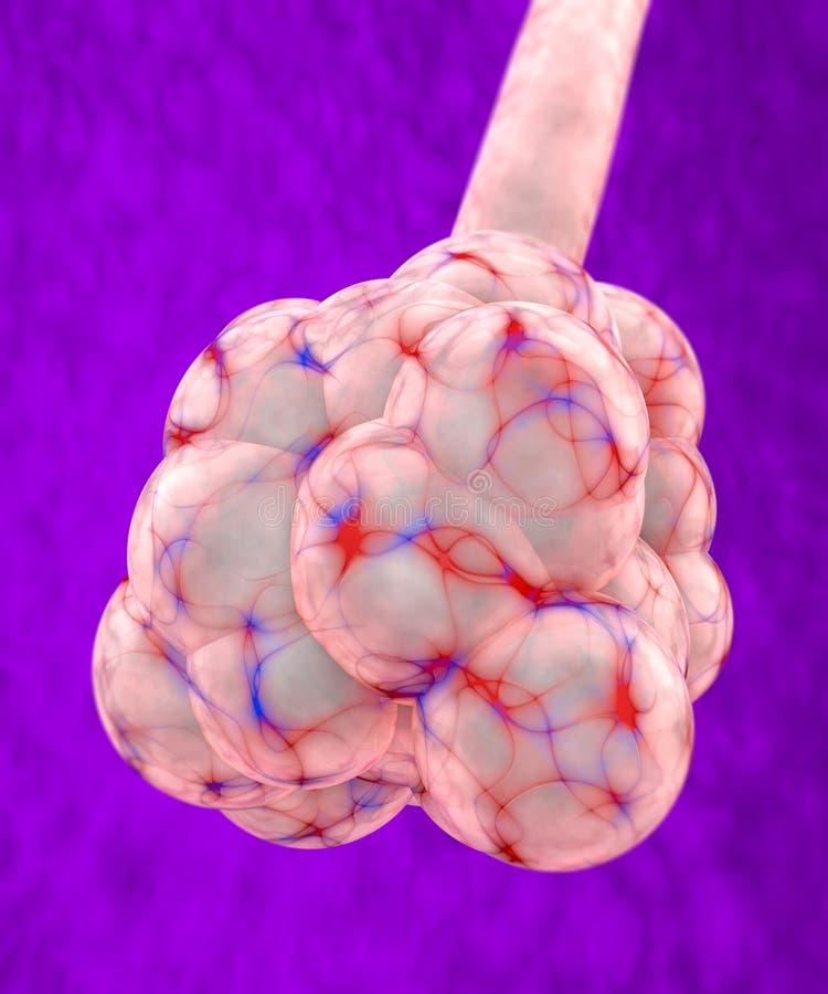 Alvéolo pulmonar, lóbulo do pulmão ilustração royalty free