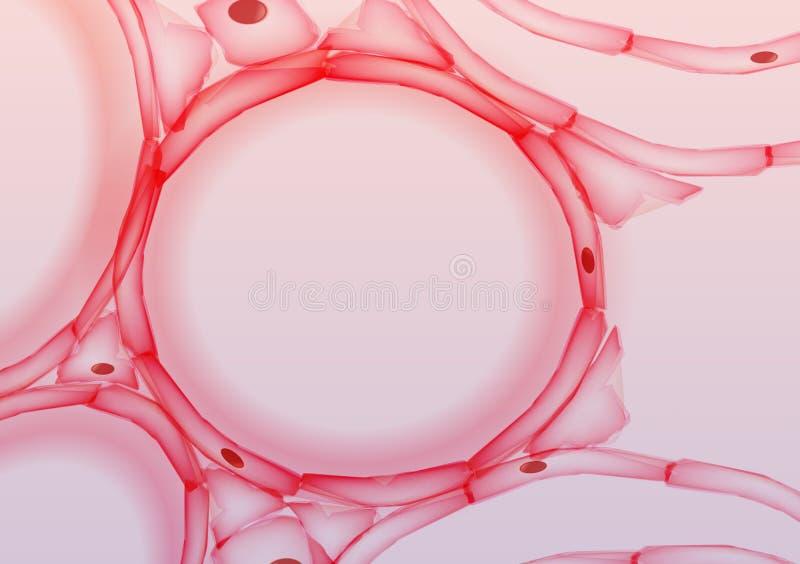 Alvéolos na fatia do tecido de pulmões, seção transversal - vetor Illustrati ilustração stock