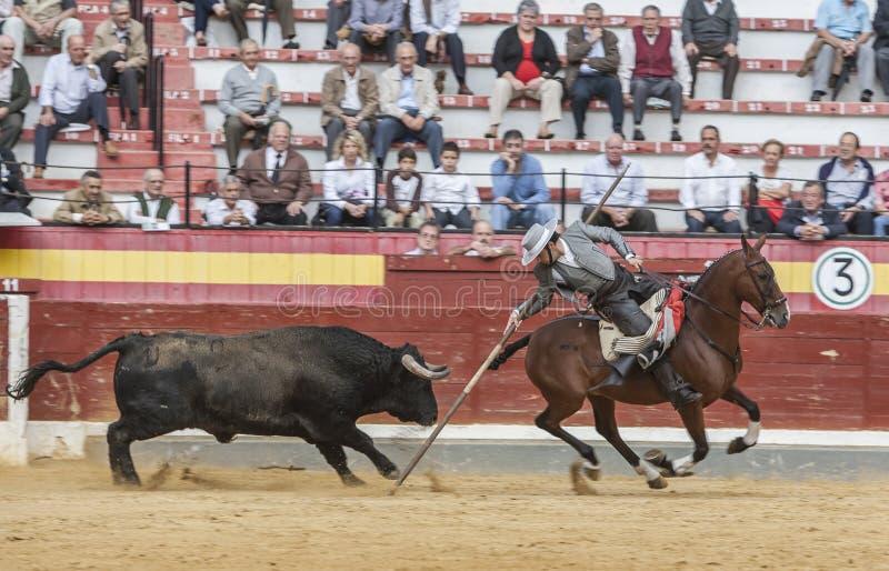 Alvaro Montes, ταυρομάχος στο ισπανικό garrocha μαγισσών πλατών αλόγου ( στοκ εικόνες
