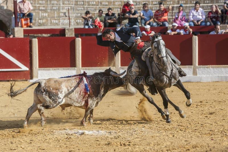 Alvaro Montes, bullfighter on horseback spanish in the bullring of Ubeda, Jaen, Spain. Ubeda, SPAIN - September 29, 2011: Alvaro Montes, bullfighter on horseback stock photos