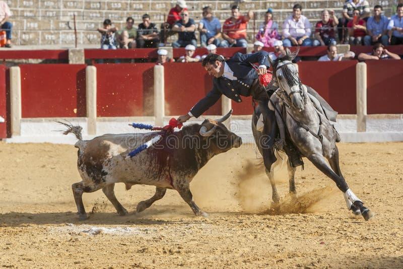 Alvaro Montes, bullfighter on horseback spanish in the bullring of Ubeda, Jaen, Spain. Ubeda, SPAIN - September 29, 2011: Alvaro Montes, bullfighter on horseback royalty free stock image