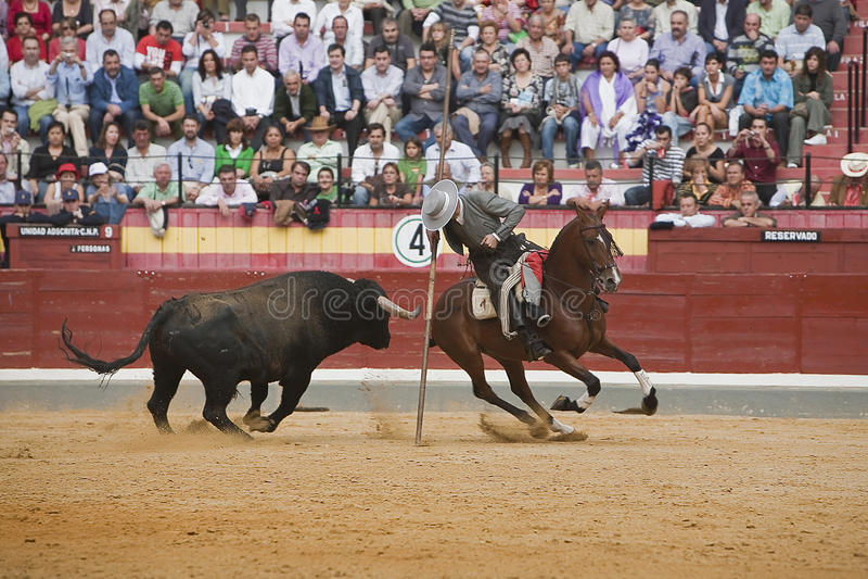 Alvaro Montes, bullfighter on horseback spanish witch garrocha. (blunt lance used on ranches), Coso de la Alameda, Jaen, Spain, 13 october2008 stock images