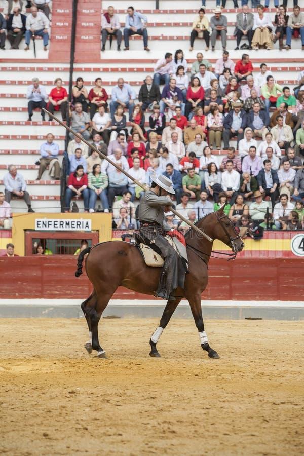 Alvaro Montes, bullfighter on horseback spanish witch garrocha (. Jaen, SPAIN - October 13, 2008: Alvaro Montes, bullfighter on horseback spanish witch garrocha royalty free stock images