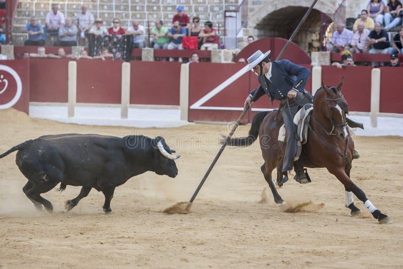 Alvaro Montes, bullfighter on horseback spanish witch garrocha (. Ubeda, SPAIN - September 29, 2011: Alvaro Montes, bullfighter on horseback spanish witch stock photo