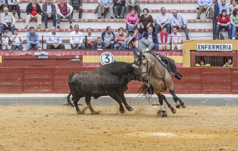 Alvaro Montes tjurfäktare på hästryggspanjor, Jaen, Spanien arkivfoton