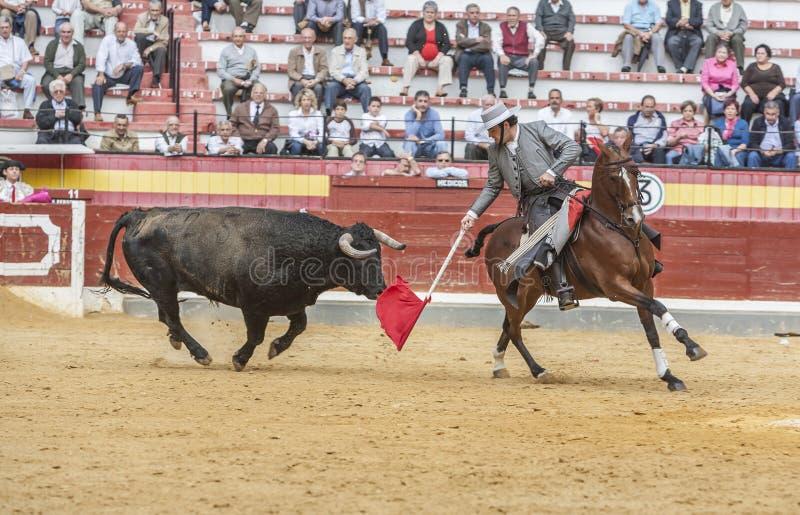 Alvaro Montes tjurfäktare på hästryggspanjor, Jaen, Spanien arkivfoto