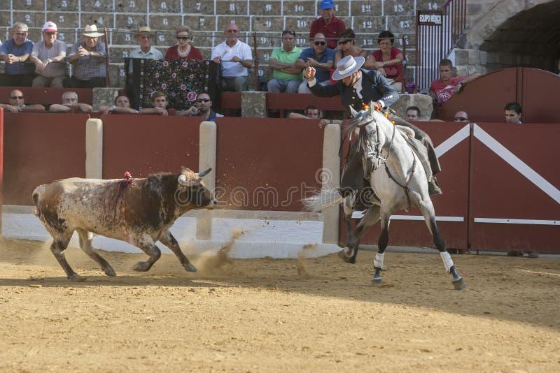 Alvaro Montes tjurfäktare på hästryggspanjor, Ubeda, Jaen, Spanien royaltyfri bild