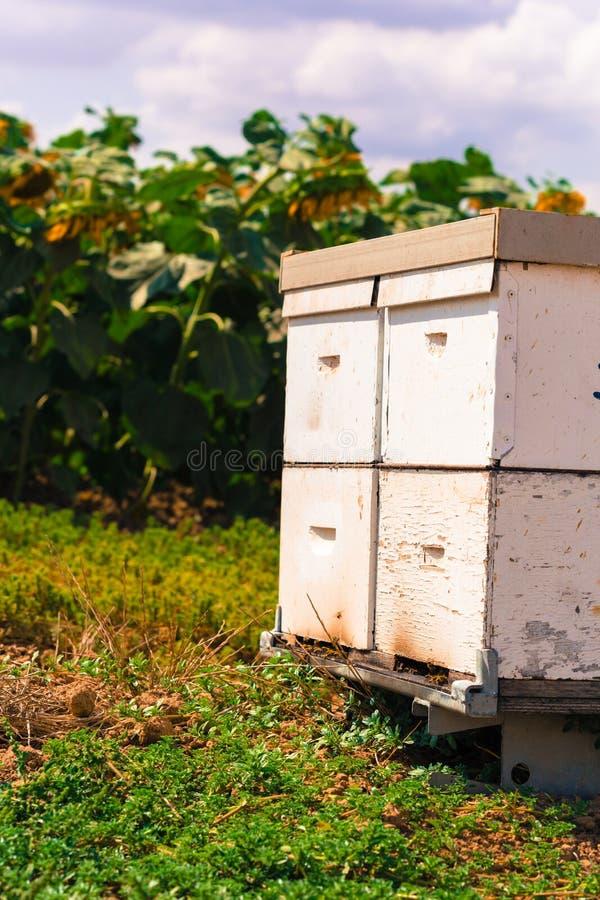 Alveare dalle api fotografie stock libere da diritti