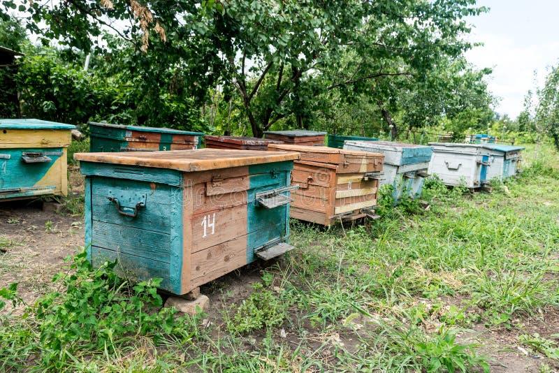 Alveare - la casa delle api nel petto della natura Apicoltore del lavoro Prodotto curativo di apicoltura Maggio, miele del fiore immagini stock