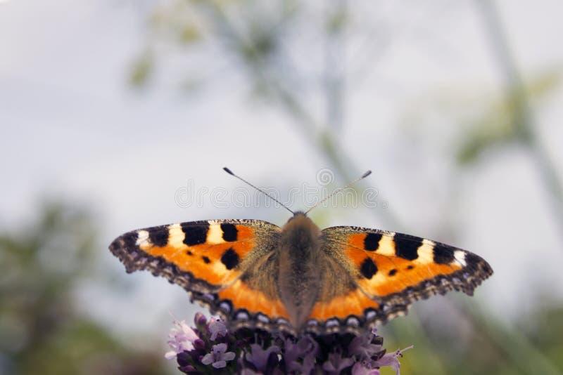 Alveari della farfalla immagine stock libera da diritti