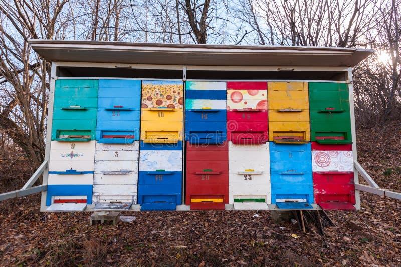 Alveari delle api nell'arnia di colore immagine stock libera da diritti