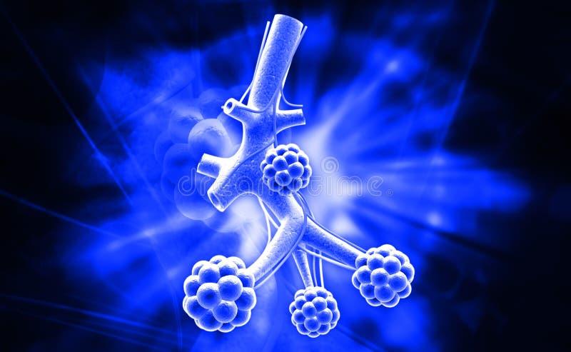 alveolen stock illustratie