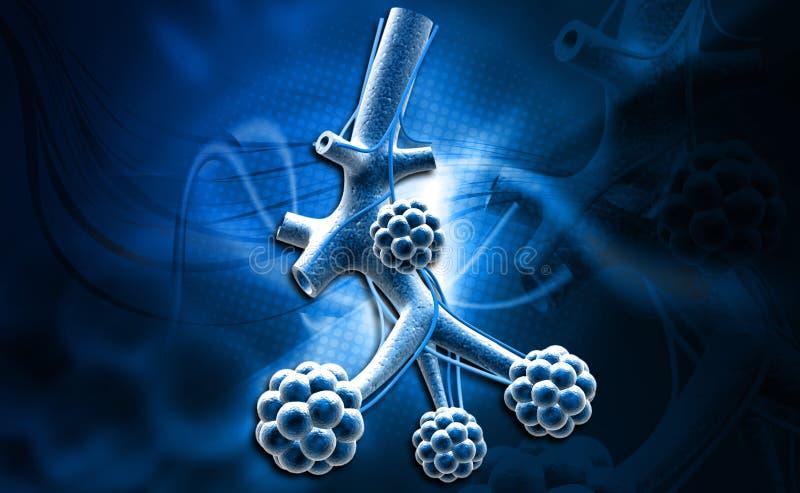 alveolen royalty-vrije illustratie