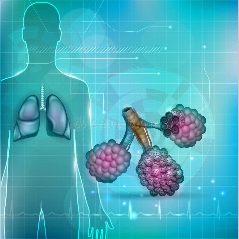 Alveoler och lungor vektor illustrationer