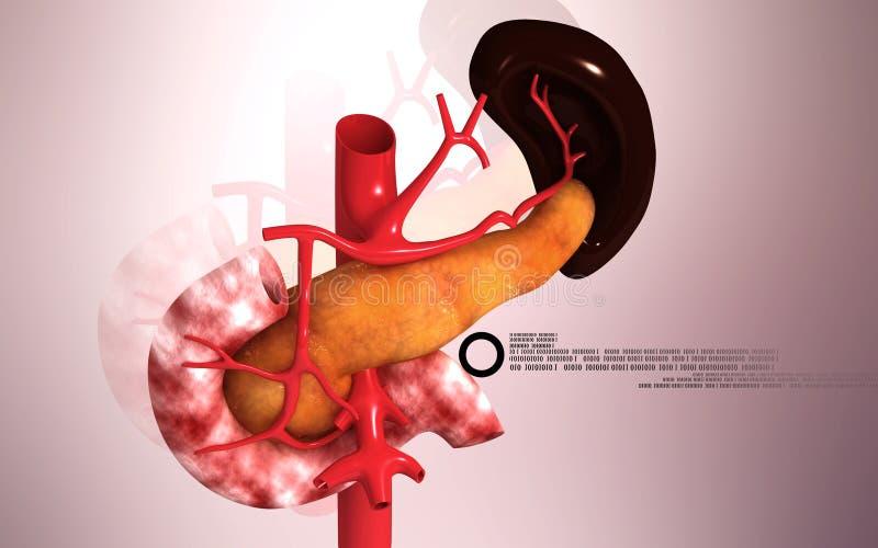 Alvleesklier en milt vector illustratie
