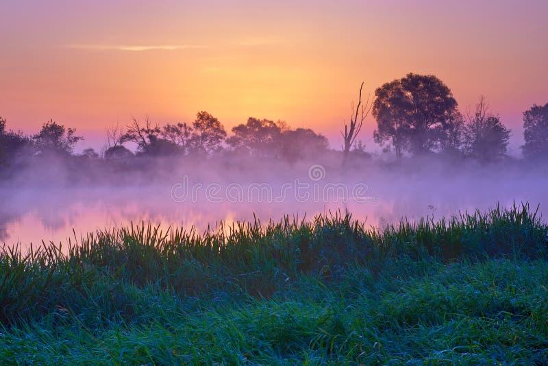 Alvorecer bonito sobre o rio de Narew, Polônia Reserva natural fotos de stock