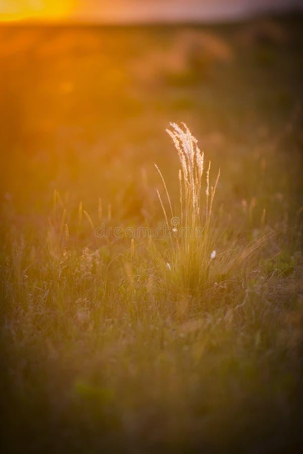 Alvorecer do crepúsculo na paisagem pampean foto de stock