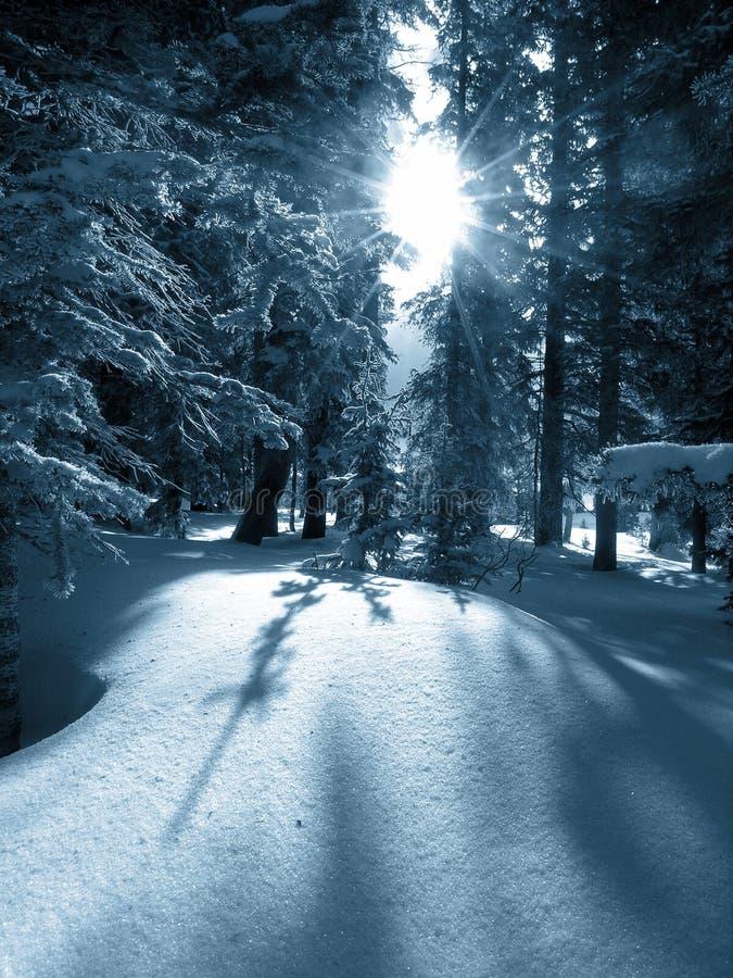 Alvorecer do inverno imagens de stock