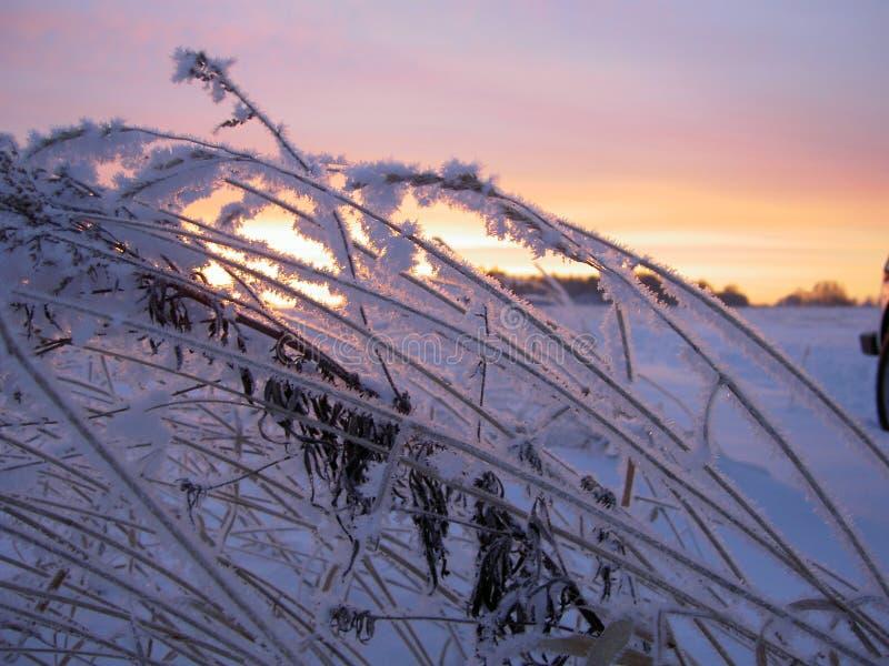 Alvorecer do inverno fotografia de stock