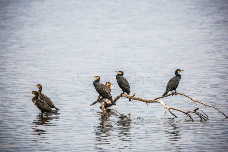 Alvorecer fantástico do inverno no lago Hula foto de stock royalty free