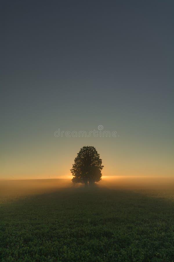 Alvorecer misterioso no campo do verão, iluminando a árvore no centro do quadro Atrás das propagações uma névoa terrível fotografia de stock royalty free