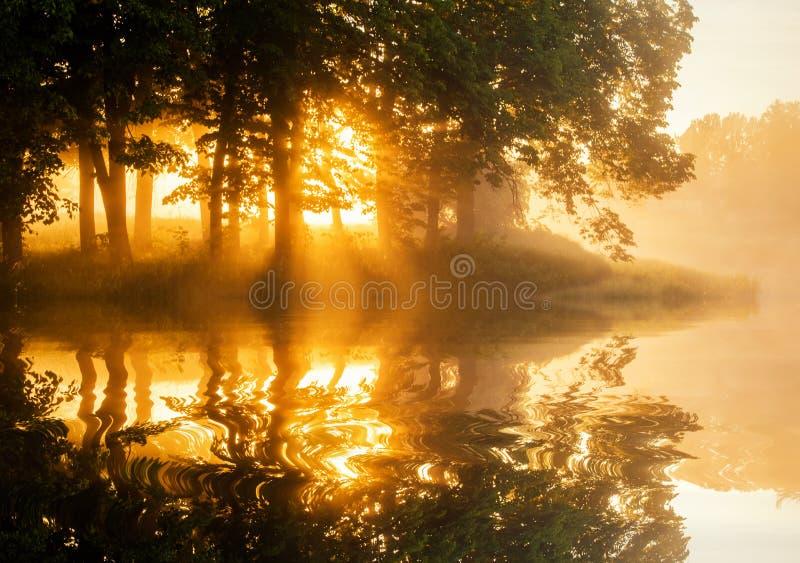 Alvorecer nevoento bonito da mola no lago da floresta fotos de stock royalty free