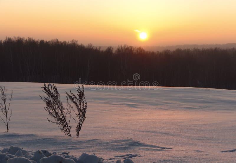 Alvorecer sobre a planície do inverno com um arbusto da grama fotografia de stock