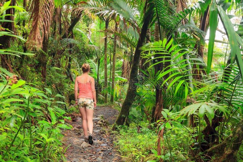 Alza de la belleza de la selva foto de archivo