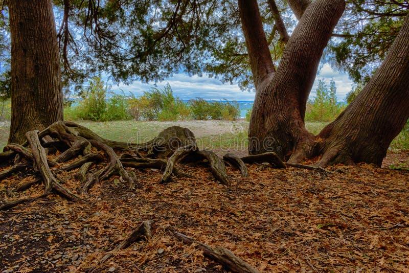 Alzando da sotto Cedar Trees che guarda verso il lago Huron sull'isola di Mackinac fotografie stock libere da diritti