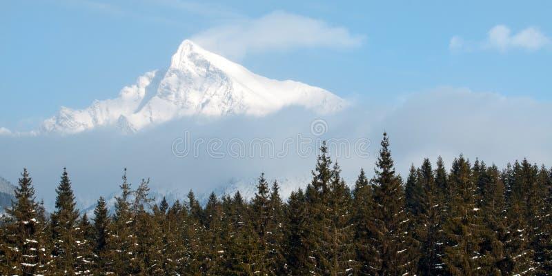Alzi Krivan verticalmente, alto Tatras, Slovacchia fotografia stock