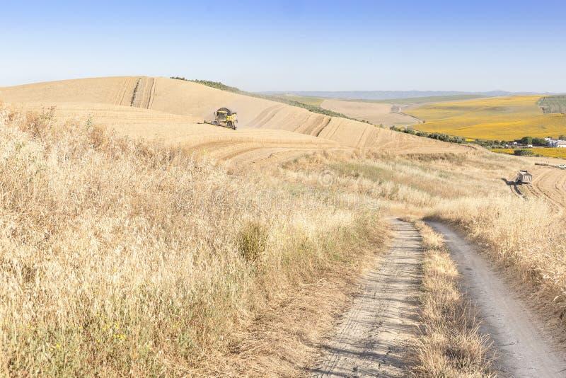 Aménagez avec des champs de blé une moissonneuse et les tournesols en parc un jour d'été et un ciel bleu photo stock