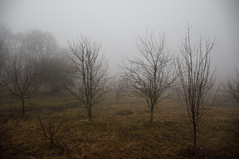 Aménagez avec le beau brouillard dans la forêt sur la colline ou traînez en parc par une forêt mystérieuse d'hiver avec des feuil images libres de droits