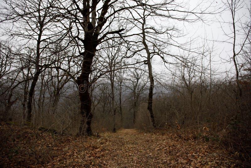 Aménagez avec le beau brouillard dans la forêt sur la colline ou traînez en parc par une forêt mystérieuse d'hiver avec des feuil photos libres de droits